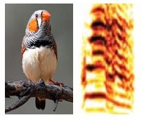 bird and brain circuit activity