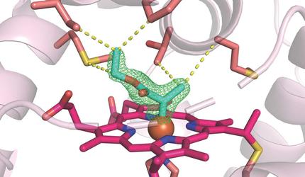 Biochemistry and Molecular Biophysics