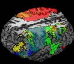 neuroscience_of_Brain_Disorders.jpg