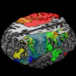 Neuroscience of brain disorders