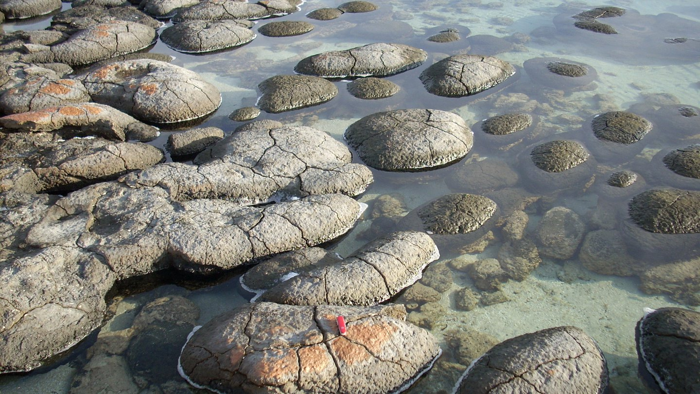 Shark Bay stromatolites