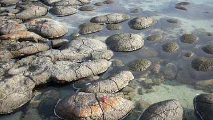 Shark Bay stromatolites