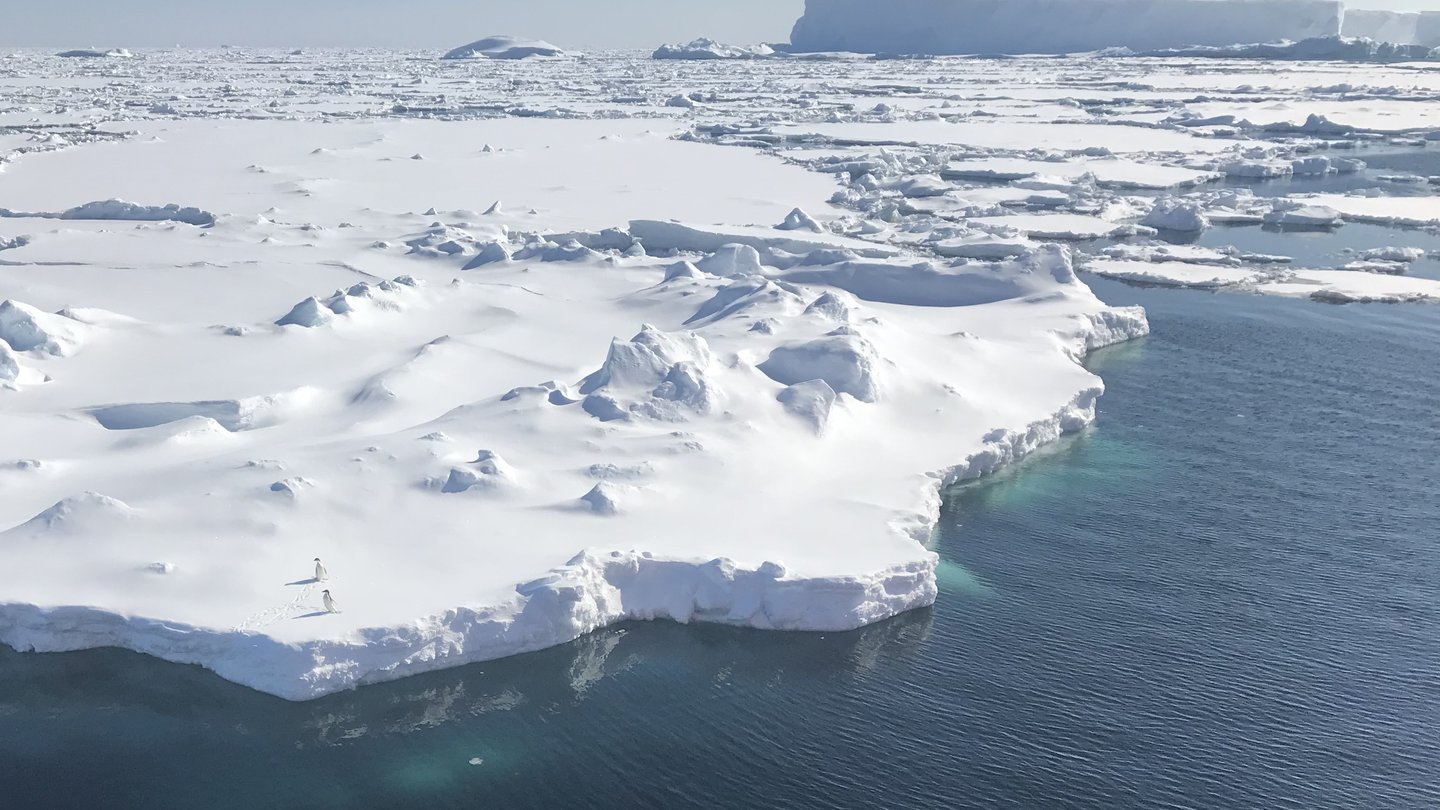 Bergs, Sea Ice and Penguins, Bllingshausen Sea, Southern Ocean