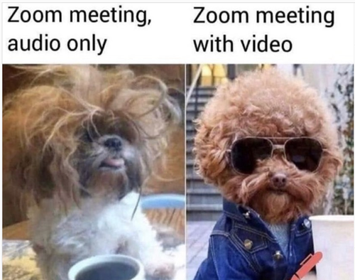 dog zoom meeting