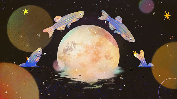 illustration of zebra fish jumping over the moon