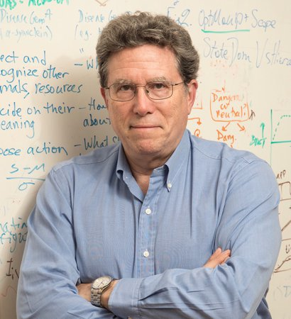 Headshot of Professor David Anderson