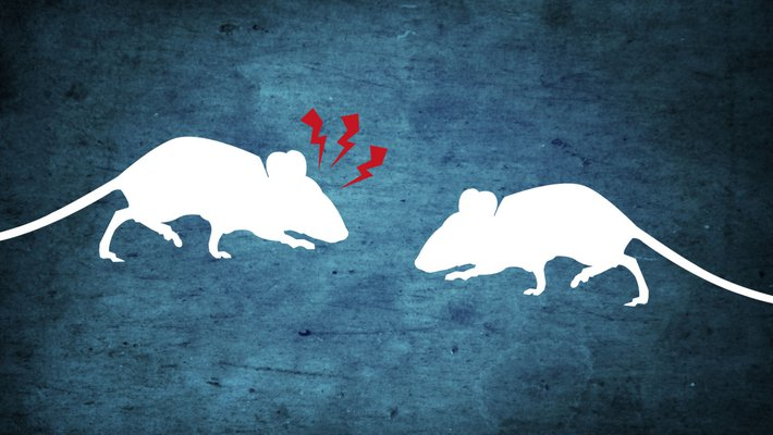 Two cartoon mice encounter one another, one sends signals of alert and alarm