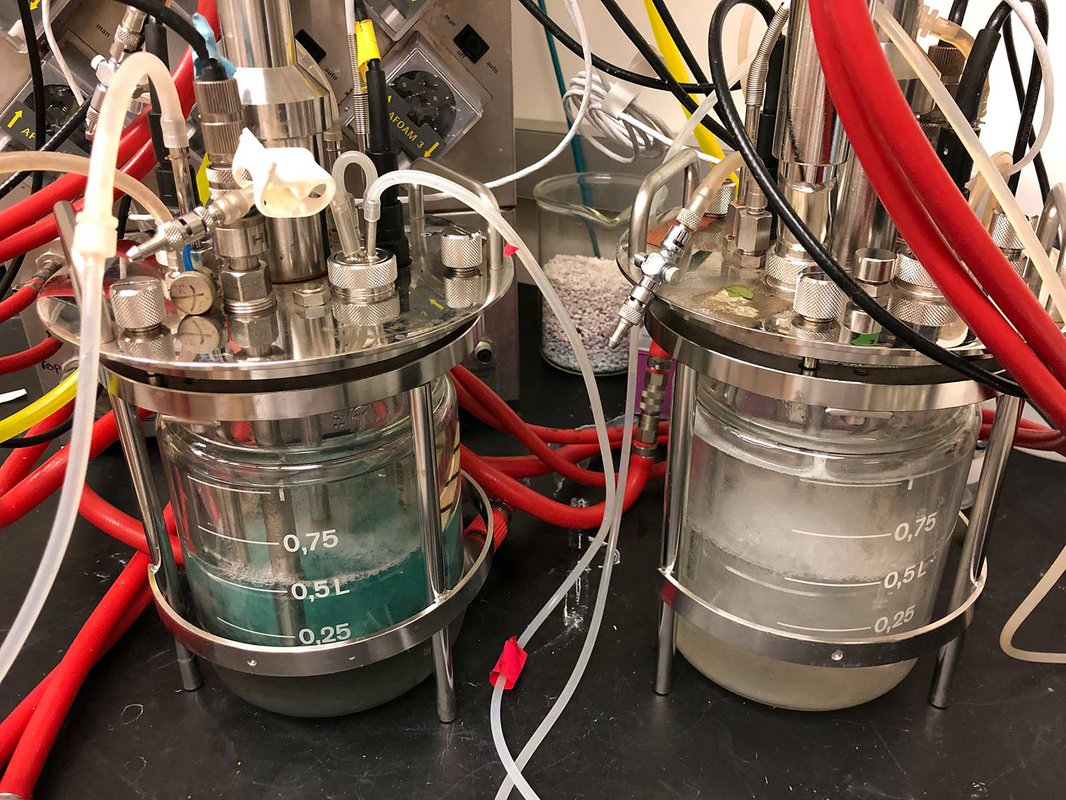Two chemostats side by side in the lab, the left one contains blue liquid and the right one contains clear liquid.
