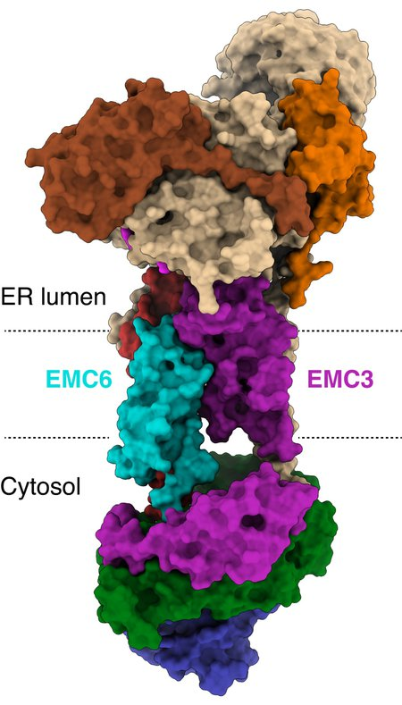 three dimensional structure of the EMC
