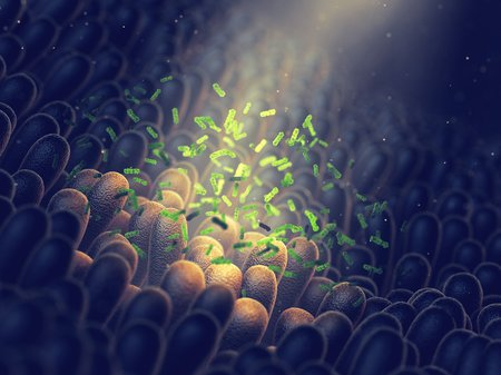 An artist's concept showing bacteria floating in and around the microvilli in the small intestines.