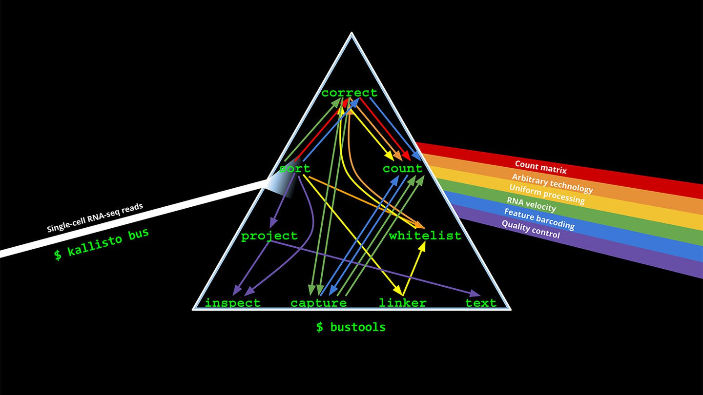 """A graphic showing a prism, with """"Single-cell RNA-seq reads"""" coming in in a single stream on the left, bouncing through the prism with labels """"correct, sort, count, project, capture, count, inspect, whitelist, linker, text"""". A rainbow of options exits the prism at right, with individual labels """"count matrix, arbitrary technology, uniform processing, RNA velocity, feature barcoding, quality control."""""""