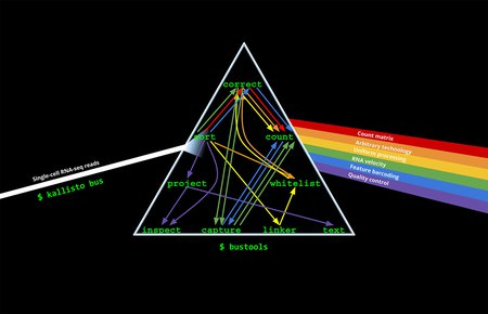 "A graphic showing a prism, with ""Single-cell RNA-seq reads"" coming in in a single stream on the left, bouncing through the prism with labels ""correct, sort, count, project, capture, count, inspect, whitelist, linker, text"". A rainbow of options exits the prism at right, with individual labels ""count matrix, arbitrary technology, uniform processing, RNA velocity, feature barcoding, quality control."""