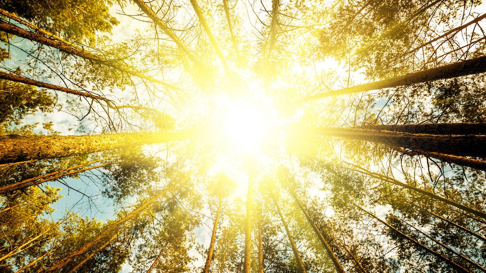 Sun shining through the trees.